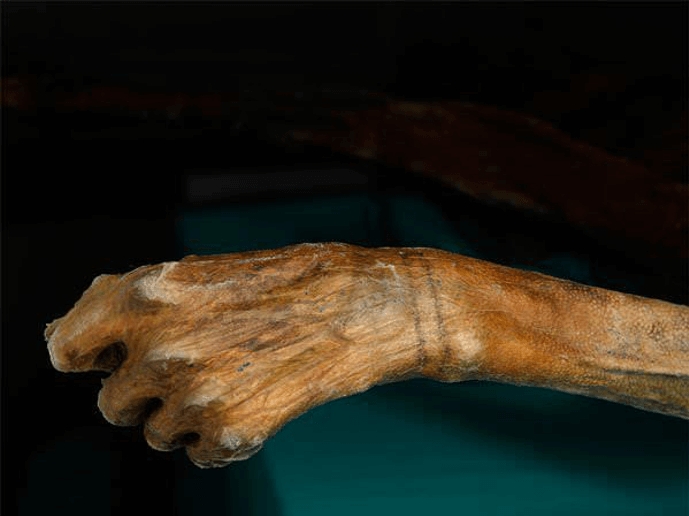 Otzi the Iceman with the stick and poke tattoo on his wrist
